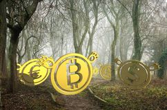 Coin bears lost in foggy forest. 3d illustration stock photo