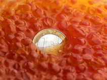Coin in Caviar Royalty Free Stock Photo
