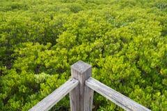 Coin de passage couvert de pont en bois dans la forêt de palétuvier photographie stock libre de droits
