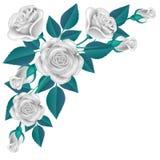 Coin de rose de blanc avec la feuille bleue d'isolement sur le blanc Image libre de droits