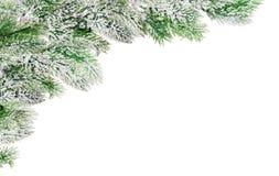 Coin des branches vertes de pin dans la neige images libres de droits