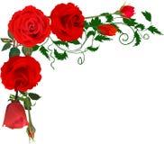 Coin des roses d'isolement par rouge lumineux Image stock