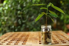 Coin Glass and growing small plant, illustration for business profit increase. Photo coin Glass and growing small plant, illustration for business profit stock photos