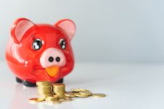 Coin gold and piggy bank royalty free stock photos
