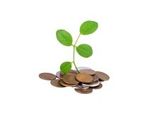 Coin and green leaf Royalty Free Stock Photo