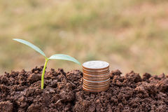 Coin and green seedling growing out of soil in sunshine Stock Image