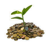 Coin Grow Royalty Free Stock Photography