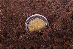 Coin Growing in Soil Stock Photography