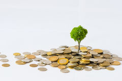 Coin growing tree Royalty Free Stock Photos