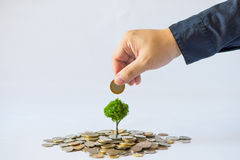 Coin growing tree. Suggesting that the economic recovery stock photos