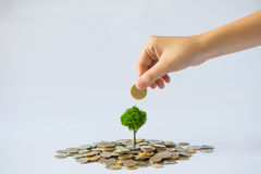 Coin growing tree. Suggesting that the economic recovery stock images