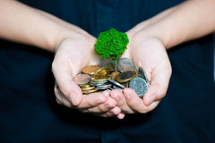 Coin growing tree. Suggesting that the economic recovery royalty free stock photo