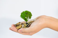 Coin growing tree. Suggesting that the economic recovery royalty free stock photos