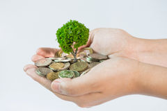 Coin growing tree. Suggesting that the economic recovery stock photo