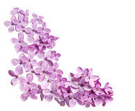 Coin lilas image stock