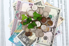 Coin money with green leaf growing Stock Image