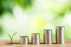 Coin Money Piles Of Coins Trees on the pile of money Royalty Free Stock Images