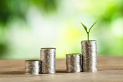 Coin Money Piles Of Coins Trees on the pile of money Royalty Free Stock Image
