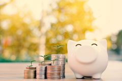 Coin piggy bank and green plant. In wood and tree bokeh background.color of vintage tone concept save money Stock Images