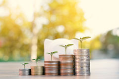 Coin piggy bank and green plant. In wood and tree bokeh background.color of vintage tone concept save money Royalty Free Stock Photo
