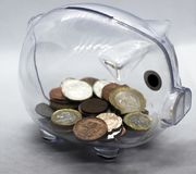 Coin in a piggy bank, a pig. stock image