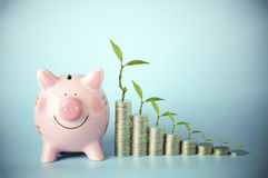 Coin and pink bank with small tree, concept in save money. Coin and pink bank with green small tree, concept in save money Stock Photography