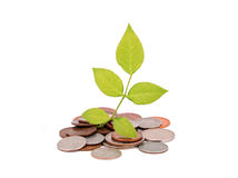 Coin and plant Royalty Free Stock Photos