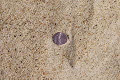 Coin in sand. Royalty Free Stock Image