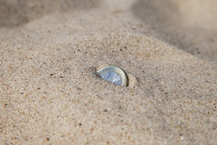 Coin in sand. Stock Photos