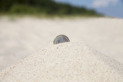 Coin in sand. Stock Photography