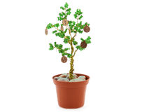 A Coin Tree Royalty Free Stock Images