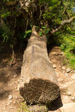 Coin tree at Tarn Hows Lake District National Park England uk Royalty Free Stock Photography