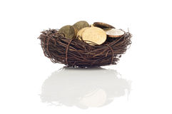 Coins in bird nest Royalty Free Stock Images