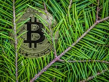 Coins of btc on the branches of spruce. Christmas crypto gift. stock photos