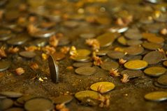 Coins. Of buddha Royalty Free Stock Image