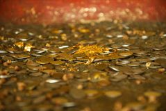 Coins of buddha Stock Photography
