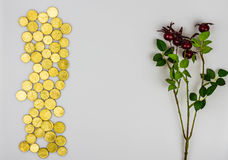 Coins with Christmas holly on a white background Royalty Free Stock Image