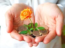 Coins dirhams in hand and rose. The concept of business growth and success. Stable development economy. Coins dirhams in his hand and rose. The concept of royalty free stock image