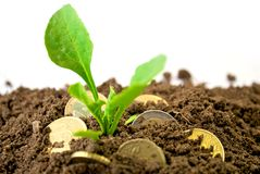 Coins in dirt concept. Coins in dirt grow with plant Stock Photography