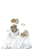 coins eurobanhoppning ut water Royaltyfria Bilder