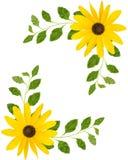 Coins faits de fleurs jaunes photo stock