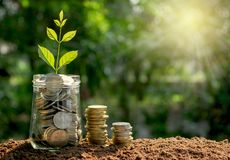 Coins in glass jar concept with young plant on top in the morning under garden background. stock photo