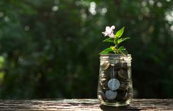 Coins in glass jar with plant concept under garden background. stock image