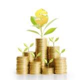Coins graph stock market Royalty Free Stock Photos