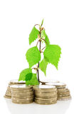 Coins and green plant Stock Images