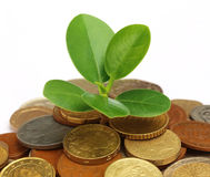 Coins with green plant Stock Photography