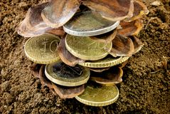 Coins grow concept Stock Images