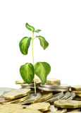 Coins growth Royalty Free Stock Image