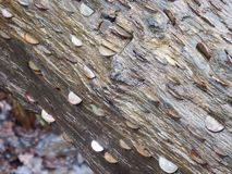 Coins hammered into a fallen tree Royalty Free Stock Image