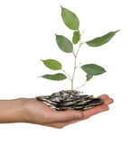 Coins in hand and branch of tree Royalty Free Stock Images
